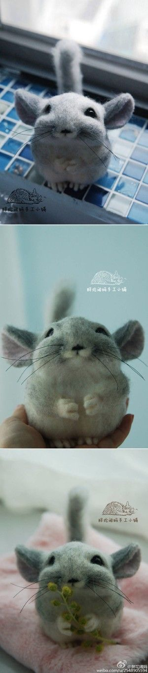Chinchilla, I think?